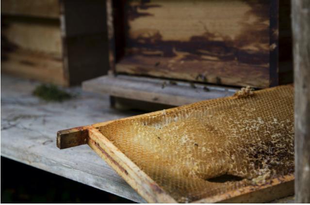 Honingbijen op Landgoed de Horst